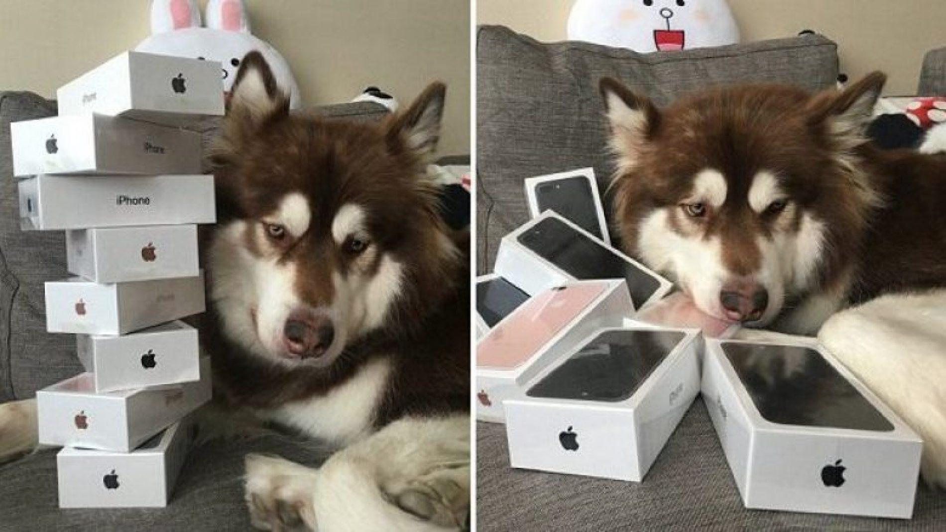I blen qenit tetë iPhone 7s (Foto)