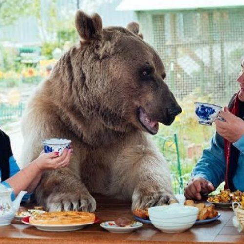 Çifti i çuditshëm: Në një shtëpi me ariun gjigant
