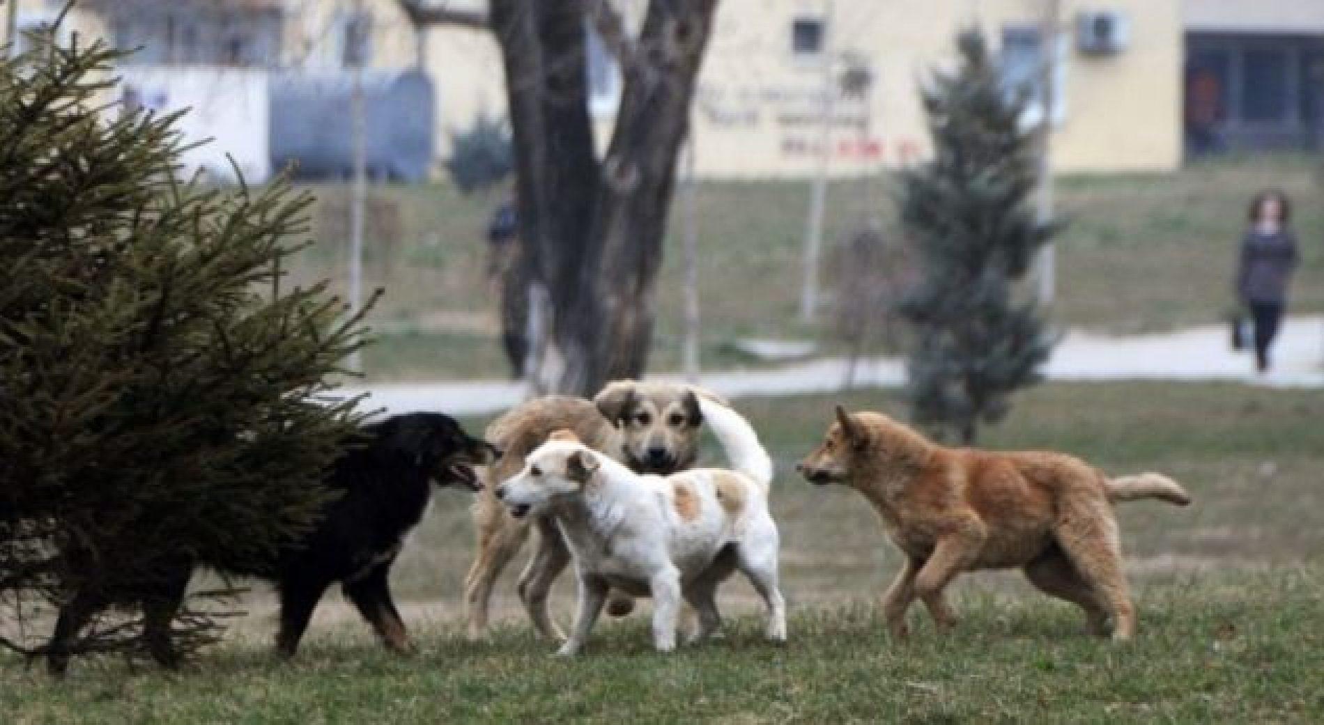 Shkup, shpenzime të mëdha për kompenzimin e dëmeve për sulmet e qenve endacak